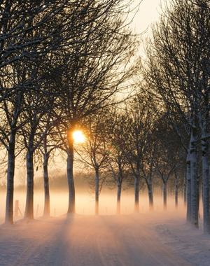 wintero4