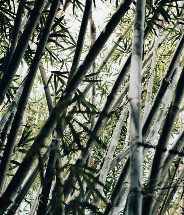 bamboe2