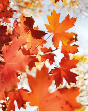 herfst1