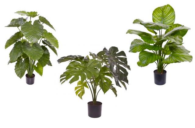 plant102