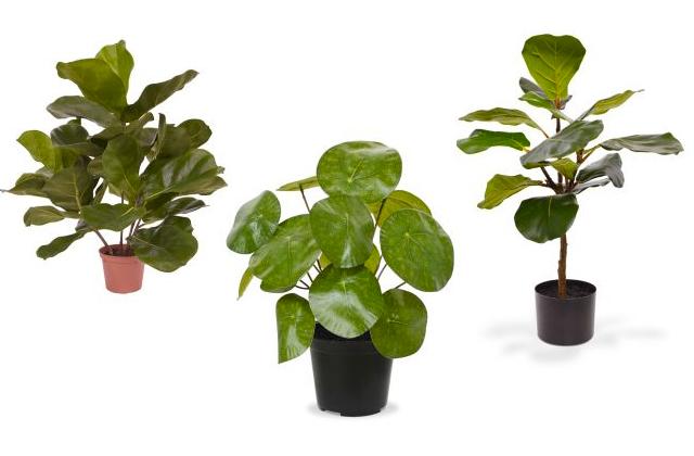 plant103